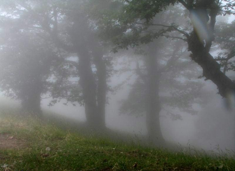Abr Forests ( Cloud Forest )
